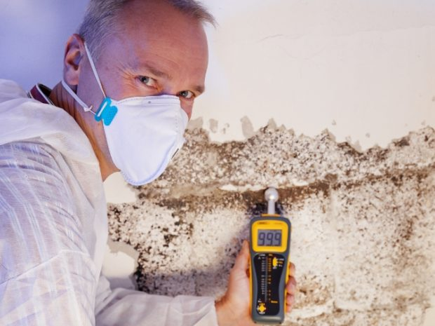 mold remediation long island
